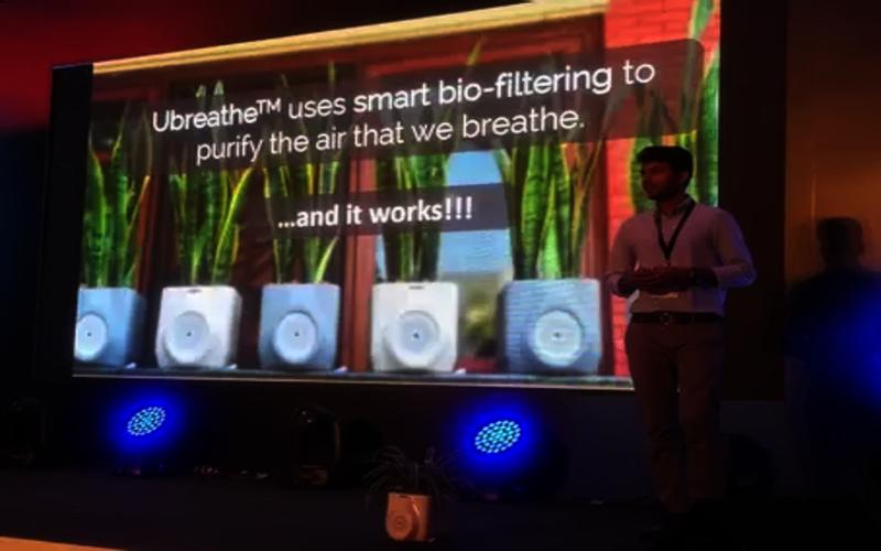 यह स्मार्ट पौधा मात्र 20 मिनट के अंदर कमरे की हवा को कर सकता है साफ