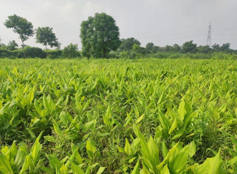 Chintan shah जैविक तरीके से खेती करके आज लाखों रुपए कमा रहे हैं।