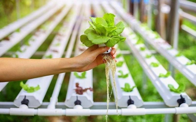 Hydroponics Technology से एक बैंक क्लर्क सब्जियां ऊगा कर महीने का ४० हजार कमाता है